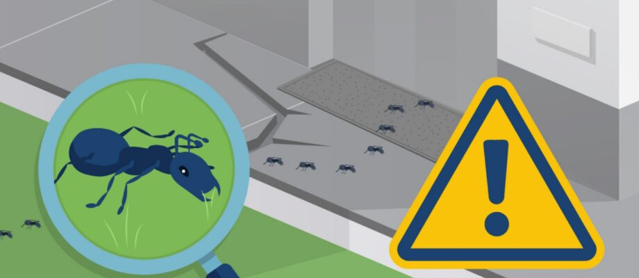 What Should You Know About Ants in the House?